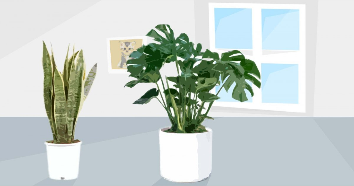 Best house plants UK: brighten your home with these great indoor plants
